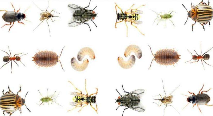 طريقة التخلص من الحشرات الصغيرة