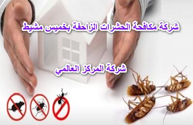 شركة مكافحة الحشرات الزاحفة بخميس مشيط